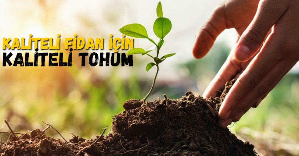 Kaliteli Fidan için Kaliteli tohum