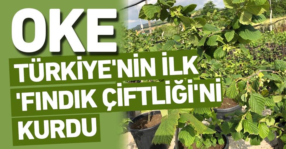 OKE, Türkiye'nin İlk Fındık Çiftliğini Kurdu