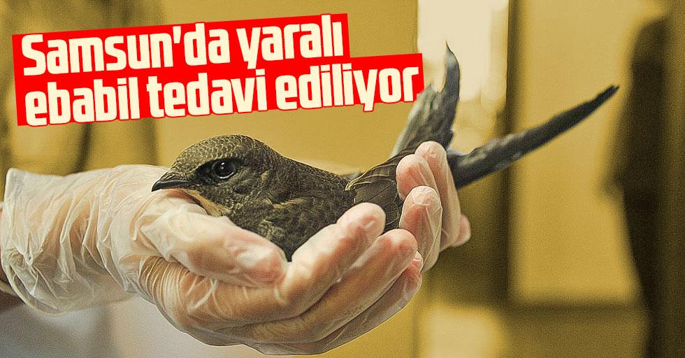 Samsun'da yaralı ebabil tedavi ediliyor