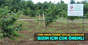 Türk fındığı üzerine yapılan çalışmalar bizim için çok önemli