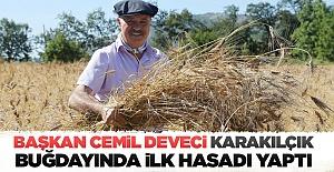 Başkan Cemil Deveci karakılçık buğdayında ilk hasadı yaptı