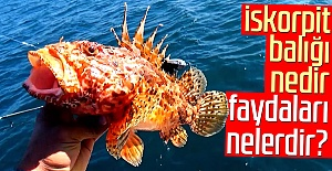 İskorpit balığı nedir, faydaları nelerdir?