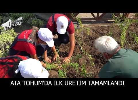 Atakum Belediyesi AtaTohum'da ilk üretim tamamlandı